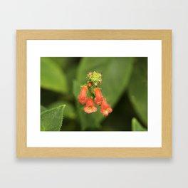 Kohleria from Bud to Bloom Framed Art Print