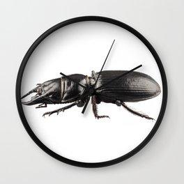 beetle species Lucanus cervusbeetle species Lucanus cervus Wall Clock
