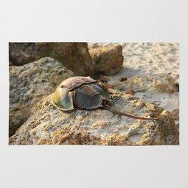 Horseshoe Crab Rug