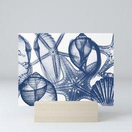 Seashell Collection Mini Art Print