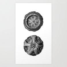 Mystical Orbs Art Print