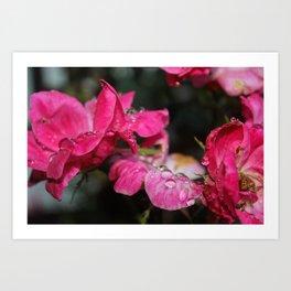 Dew Drops on Roses Art Print