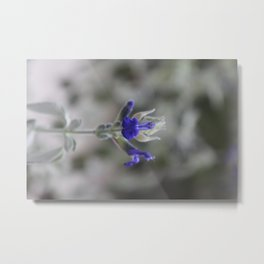 Blue Salvia Metal Print