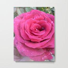 Pink petals & rain drops Metal Print