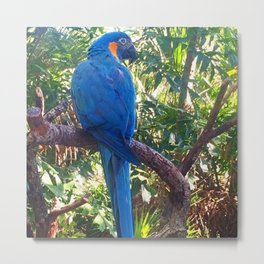 Yes I'm a Natural Blue Metal Print