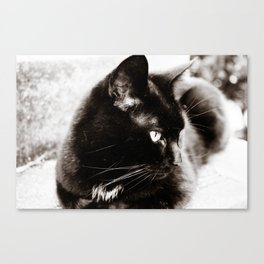 her majesty the cat Canvas Print