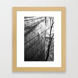 Tree shadows Framed Art Print