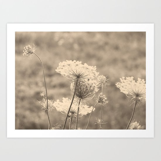 Lace in the Meadow Art Print