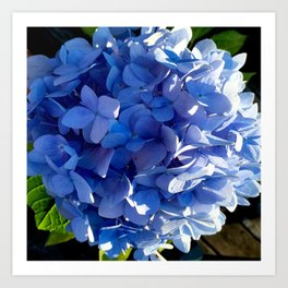 Blue Hydrangia Flower Blossom Art Print
