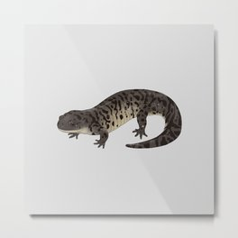 Barred Tiger Salamander Metal Print