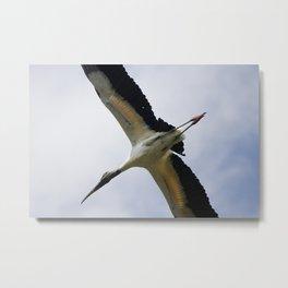 Flying Wood Stork Metal Print