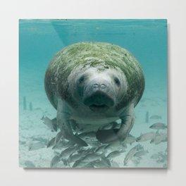 USA Photography - Miami Stray Seal Metal Print