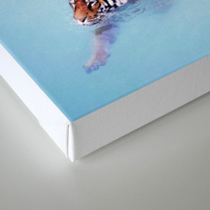 Palm Springs Tigers Canvas Print