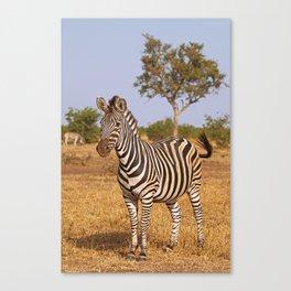 Zebra - Africa wildlife Canvas Print