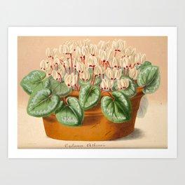 Cyclamen Atkinsil Vintage Botanical Floral Flower Plant Scientific Illustration Art Print