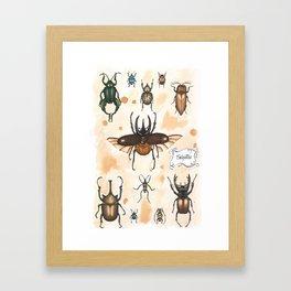 Beetles study Framed Art Print