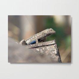 Blue Belly2 Metal Print