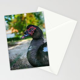 Muscovy Duck - Colorful Stationery Cards