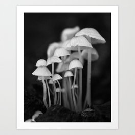 Black and White Mushroom Colony  Art Print