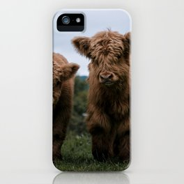 Scottish Highland Cattle Calves - Babies playing II iPhone Case