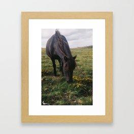 Dartmoor pony #2 Framed Art Print