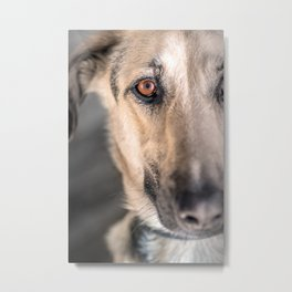 Part of brown eye dog head portrait close-up Metal Print