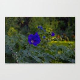 Summer Purple flowers Canvas Print