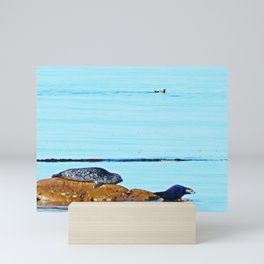 Seal, Pup and Eider Duck Mini Art Print
