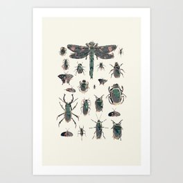 Collection of Insects Art Print
