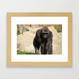 The Lonely Ape Framed Art Print