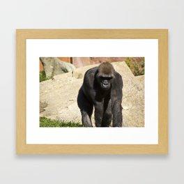The Lonely Ape Framed Art Print