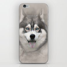 Siberian Husky 2 iPhone & iPod Skin
