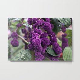 Purple Goodness Metal Print