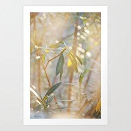 Oleander Glow © Vicki Ferrari Art Print