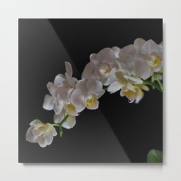Arching Orchid Metal Print