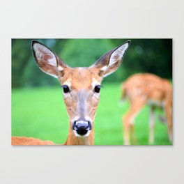 Big Brown Eyes   Deer Canvas Print