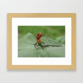 Gecko iguana Red Head Framed Art Print