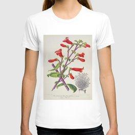 Penstemon Baccharifolius Vintage Botanical Floral Flower Plant Scientific T-shirt