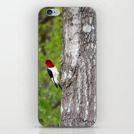 Red-headed Woodpecker iPhone Skin