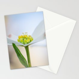 Dogwood 3 Stationery Cards