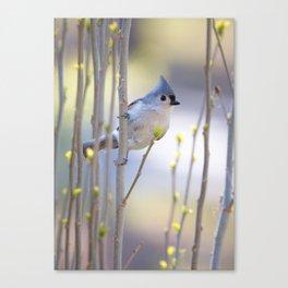 Titmouse in Bush Canvas Print