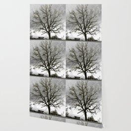 L'arbre de Gourdon Wallpaper