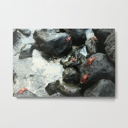 Critters at the Bay Metal Print