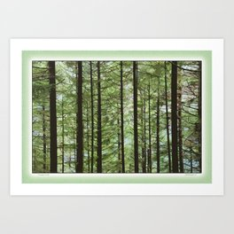 YOUNG FOREST Art Print