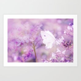 Butterfly :: White Violet Art Print