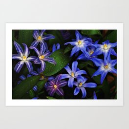 Bluets Art Print