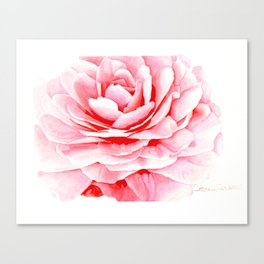 Watercolor Pink Camellia Canvas Print