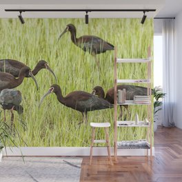 Six White-Faced Ibis in Breeding Plumage Wall Mural