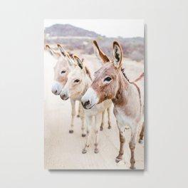Three Donkeys in Baja, Mexico Metal Print