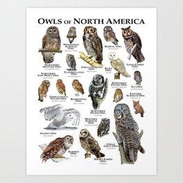 Owls of North America Art Print
